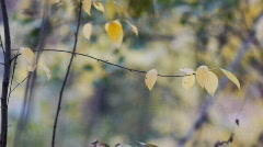 AUTUMN FALLING2 - stock footage