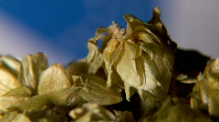 Hops 3 1080 Stock Footage