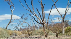Bare Trees Stock Footage