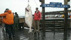 Pallas kiinni Seward Alaska P HD 8231 Arkistovideo