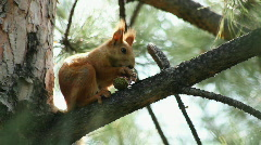 Squirrel 4 Stock Footage