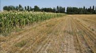 Cornfield 12 Stock Footage