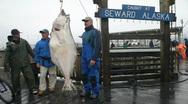 Halibut fishermen hanging P HD 8226 Stock Footage