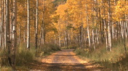 Stock Video Footage of Fall Foliage Autumn in Aspen, Colorado