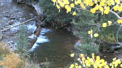 Fall Foliage Autumn in Aspen, Colorado - stock footage
