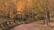 Fall Foliage Autumn in Aspen, Colorado Stock Footage