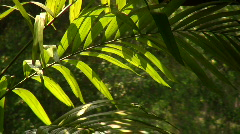 A palm frond in sunlight Stock Footage