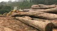 RAIN FOREST LOGGING Deforestation Vietnam Ecology Climate Change Lumber Industry Stock Footage