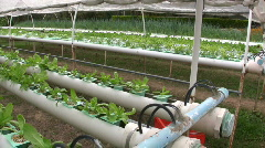 HYDROPONIC FARM Garden Grow Vegetable Cultivation Crop Agricultural Technology Stock Footage