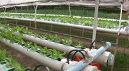 Stock Video Footage of HYDROPONIC FARM Garden Vegetable Cultivation Crop Agricultural Technology