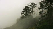 Stock Video Footage of Mist on the Oregon Coast