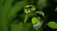 Stock Video Footage of Green leaves in tropical rain