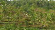 Stock Video Footage of Rice Paddy Terrace