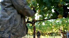 Wine Grape Immigrants Stock Footage