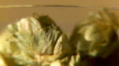 Hops 2 1080 Stock Footage