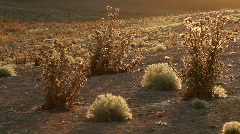 Prickly plant 17 - stock footage