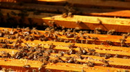 Bees in the apiary Stock Footage