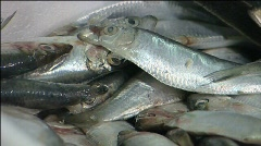 Fish for sale 004 Stock Footage