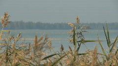 Reed standing in a calm lake on a sunny autumn day Stock Footage
