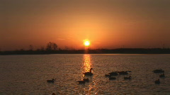 Sunrise Duck Hunting Stock Footage