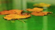 Autumn nature background Stock Footage