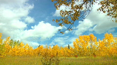 White Clouds Sail Across an Autumn Blue Sky Framed with Golden Leafy Trees - stock footage