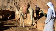 Stock Video Footage of Bedouins. Moses Mountain. Sinai. Egypt