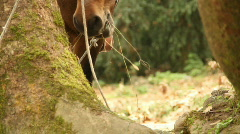 Hungry horse Stock Footage