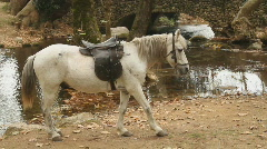 Grey horse Stock Footage