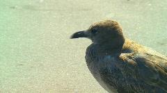 Close up of shore bird 02 Stock Footage