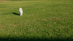 Dogs Chase Ball Stock Footage