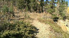 Rocky trail path tilt up thru green fir pine forest reveals bright blue sky Stock Footage