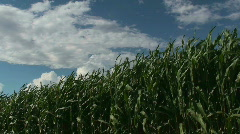 Waves Of Grain Stock Footage
