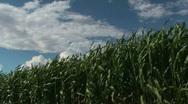 Waves Of Grain Stock Footage