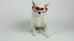 Valentine's Day Dog Wears Heart Eyeglasses Stock Footage