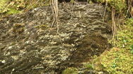 Mossy Forest Floor Lichen Covered Rock Panning View Stock Footage