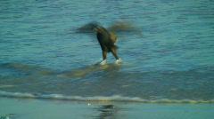 Bird lennon hidas mo Arkistovideo
