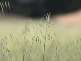 Stock Video Footage of Grass Blowing in a Valley's Field
