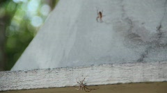 Two Spiders Fight Stock Footage