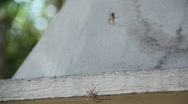 Stock Video Footage of Two Spiders Fight