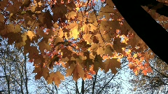 MN fall leaves Stock Footage