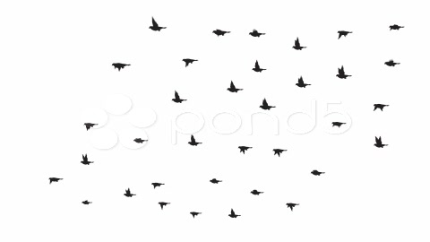 After Effects Project - Pond5 Flock of 35 Birds 866261