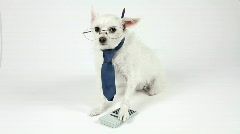 Dog Accountant Wears Eyeglasses And Tie Pen Behind Ear Paw On Calculator Stock Footage