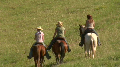 UT PC Horses Meadow 3 Stock Footage