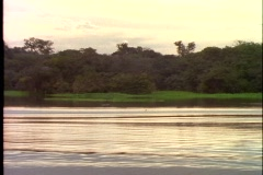 Amazon River, small  boat ride, POV, side, silhouette, rain forest passing Stock Footage
