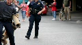 K9 police dog training Footage