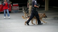 Stock Video Footage of K9 police safety
