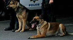 K9 police dogs Stock Footage