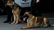Stock Video Footage of k9 police dogs