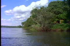 POV boat on river in jungle, Brazilian lake near Iguazu Falls Stock Footage